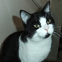 Adopt A Pet :: Hadrian - Mississauga, Ontario, ON