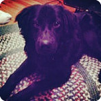 Adopt A Pet :: Dixon - Scottsdale, AZ