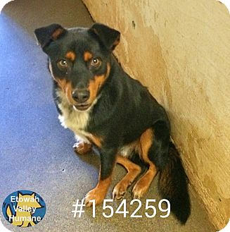 Rottweiler/Husky Mix Dog for adoption in Boston, Massachusetts - Dane