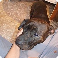 Adopt A Pet :: Chance - Malabar, FL