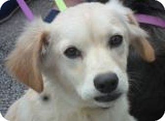 Labrador Retriever Mix Dog for adoption in Grand Saline, Texas - Charlie