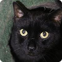 Adopt A Pet :: Moses - Columbia, MD