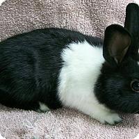 Adopt A Pet :: Taylor - Harrisburg, PA