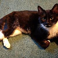 Adopt A Pet :: Zena - Salamanca, NY