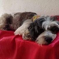 Adopt A Pet :: Odin - BONITA, CA