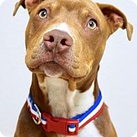 Adopt A Pet :: June - Dublin, CA