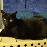 Adopt A Pet :: Chip - Belleville, MI