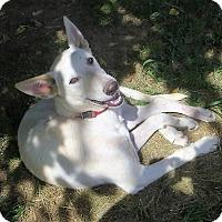 Adopt A Pet :: Kennedy - Naugatuck, CT