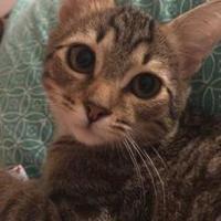 Adopt A Pet :: Bones - Gainesville, FL