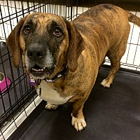 Adopt A Pet :: Missy in CT - East Hartford, CT