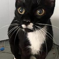 Adopt A Pet :: Norbert - St. Louis, MO