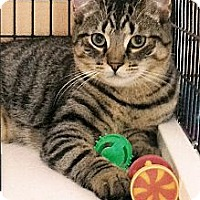 Adopt A Pet :: Barnaby - Medway, MA