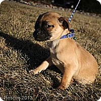 Adopt A Pet :: Jolly ToeBells - Broomfield, CO