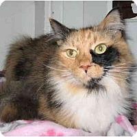 Adopt A Pet :: Clementine - Cincinnati, OH
