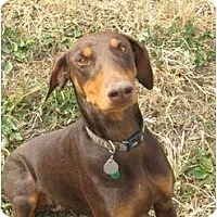 Adopt A Pet :: Lolli--adopted!! - New Richmond, OH