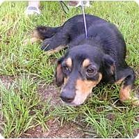 Adopt A Pet :: Queenie - HOBOKEN, GA