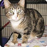Adopt A Pet :: Autumn - Shelton, WA
