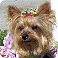 Adopt A Pet :: Chloe - Tallahassee, FL