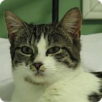 Adopt A Pet :: Muffin - Douglas, ON