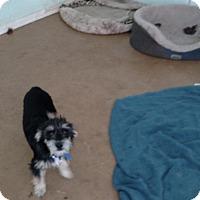 Adopt A Pet :: Buckley - Simi Valley, CA