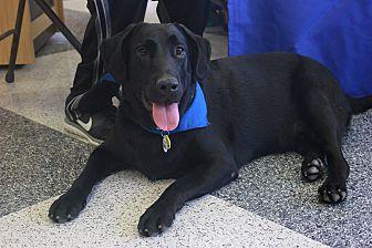 Labrador Retriever Mix Dog for adoption in Cross Roads, Texas - Cooper