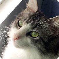 Adopt A Pet :: Vera - Irvine, CA