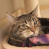 Adopt A Pet :: Scarletti - Naperville, IL