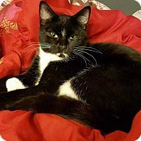 Adopt A Pet :: Tamara - South Bend, IN