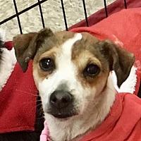 Adopt A Pet :: Olivia - Lancaster, CA