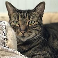 Adopt A Pet :: Colt - Hilton Head, SC