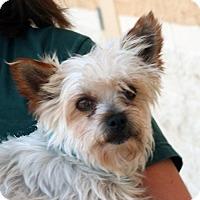 Adopt A Pet :: Pearl - Palmdale, CA
