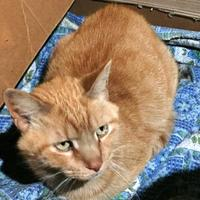 Adopt A Pet :: Tigger - Salem, OH