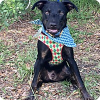 Adopt A Pet :: ADAM - Fort Pierce, FL