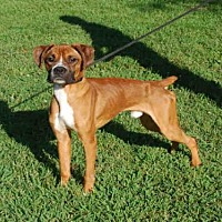 Adopt A Pet :: MAUI - Louisville, KY