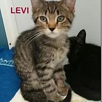 Adopt A Pet :: Levi - Mountain View, AR