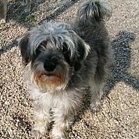 Adopt A Pet :: Piper - Mukwonago, WI