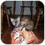 Photo 2 - Domestic Mediumhair Kitten for adoption in Union, South Carolina - Amber
