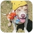 Photo 2 - Pit Bull Terrier Dog for adoption in Huntington, New York - Timothy