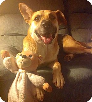 German Shepherd Dog Mix Dog for adoption in Chattanooga, Tennessee - Angel
