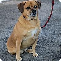 Adopt A Pet :: TJ - Stroudsburg, PA