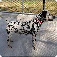 Adopt A Pet :: Jessie - League City, TX