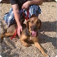 Adopt A Pet :: Nova - Alexandria, VA