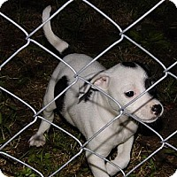 Adopt A Pet :: Trixie - Bel Air, MD