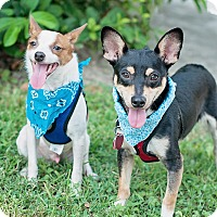 Adopt A Pet :: Chip and Dale - Kingwood, TX