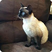 Adopt A Pet :: Meena - McDonough, GA