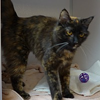 Adopt A Pet :: Star - Manning, SC