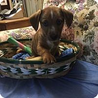 Adopt A Pet :: Tyreek pending adoption - East Hartford, CT