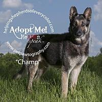 Adopt A Pet :: Champ - Montgomery, AL