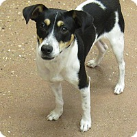 Adopt A Pet :: Wiley *Petsmart GB* - Appleton, WI