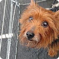 Adopt A Pet :: Sock - C.L. - San Diego, CA